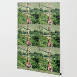 Giraffe Standing tall Wallpaper