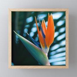 CORAL Bird of Paradise Framed Mini Art Print