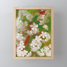 Small white flowers, close up. Framed Mini Art Print