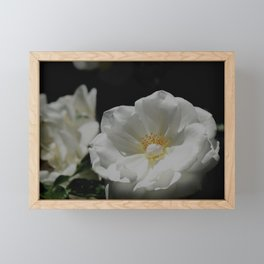 White Roses On Black Framed Mini Art Print