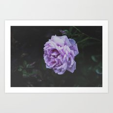 Summer Rose Art Print