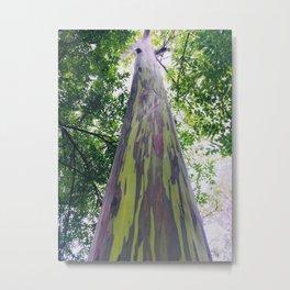 Rainbow Eucalyptus Tree Hawaii Metal Print