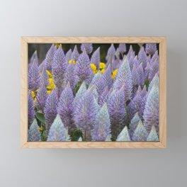 Australian Foxtail Flower Framed Mini Art Print