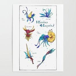 Mollusca Magica Poster