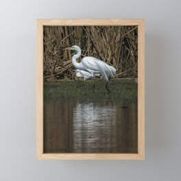 Great and Snowy Egrets, No. 3 Framed Mini Art Print