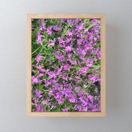Purple phlox Framed Mini Art Print