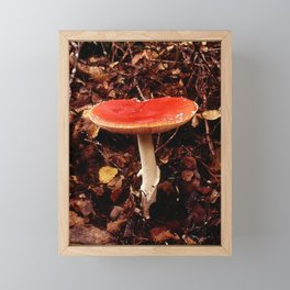 Fungi Forage #4 Framed Mini Art Print
