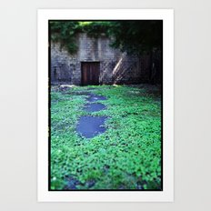 Over the Hill and through the Swamp, Color Art Print