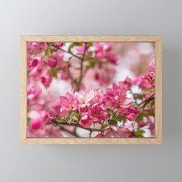 Bright Pink Crabapple Blossoms Framed Mini Art Print