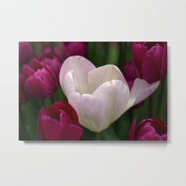 One White Tulip Metal Print