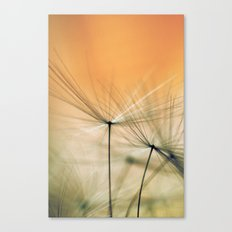Apricot Chutes Canvas Print