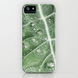 Rain water on a Purple Cauliflower leaf. Norfolk, UK. iPhone Case