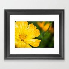 Macro Yellow Flower Framed Art Print