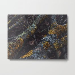 Old wood sleeping in the forest Metal Print