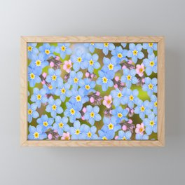 Forget-me-not flowers and buds - summer meadow Framed Mini Art Print