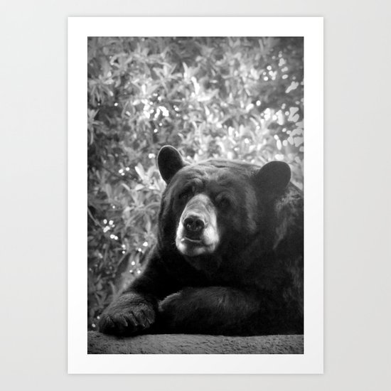 portrait of a bear Art Print