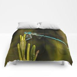 Common Blue Damselfly Comforters