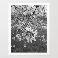 Places in Black & White: Plum Tree 17 Art Print