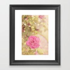 Summer Rose Framed Art Print
