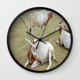 Oryx Wall Clock