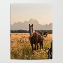 Horses Grazing Below the Tetons Poster