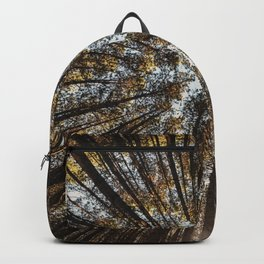Pines Above Backpack