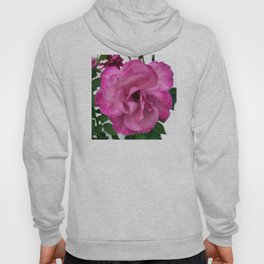 Bodacious Pink Rose | Large Pink Flower | Nature Photography Hoody