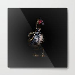 Muscovy Duck Portrait Metal Print