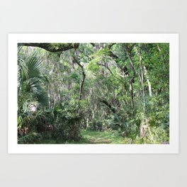 Hiking in Florida Art Print