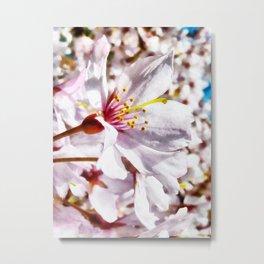 The Cherry Blossom Metal Print