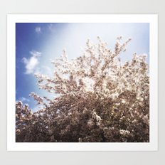 Blossoms in Spring Art Print