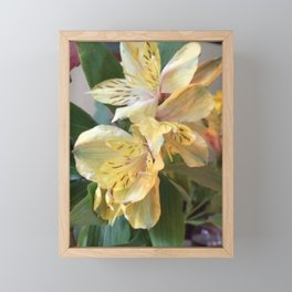 Yellow Lily Framed Mini Art Print