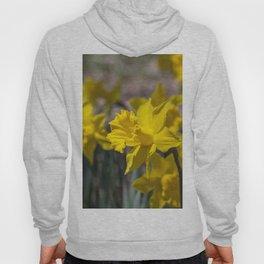 Daffodils 3 Hoody