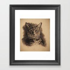 Edeweiss Framed Art Print