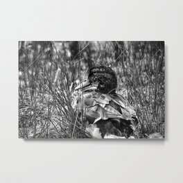 Into the Wilderness - Black & White Metal Print
