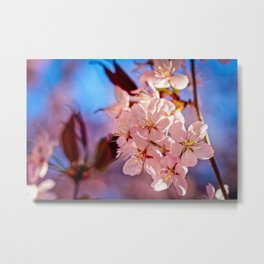 Charming Bunch Of Pink Sakura Cherry Blossoms Metal Print