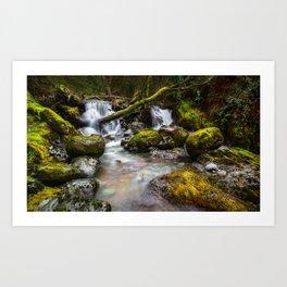Enchaned forest Art Print