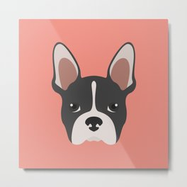 Boston Terrier Dog Metal Print