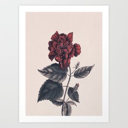 Flower near me 7 Art Print