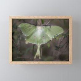 Luna Moth II Framed Mini Art Print