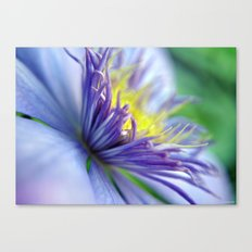 Clematis in Full Bloom Canvas Print