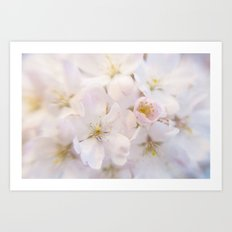 Ornamental Cherry Blossom Art Print