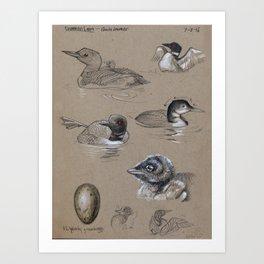 Common Loon Studies Art Print