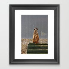 Meerkat No.1 Framed Art Print