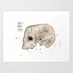 Adult male skull Art Print