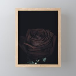 A crimson rose in the darkness Framed Mini Art Print