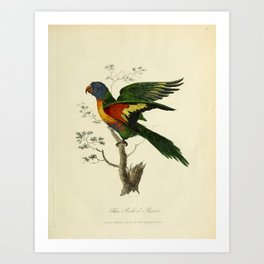 """""""Blue Bellied Parrot"""" by Sarah Stone, 1790 Art Print"""