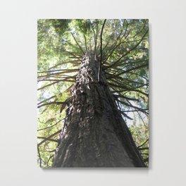 Redwood Metal Print