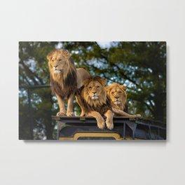Lion Kings of the Serengeti, Africa Metal Print