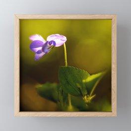 Solo Forest Viola Shiny #decor #society6 Framed Mini Art Print